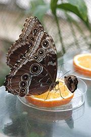 Botanischer Garten München Nymphenburg Tropische Schmetterlinge