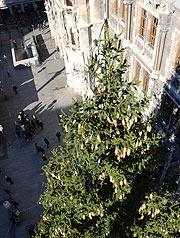 Marienplatz Weihnachtsmarkt.Christbaum 2018 Für Den Münchner Christkindlmarkt Auf Dem