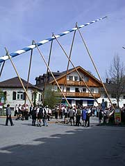 Maibaum Aufstellen traditionell in Glonn