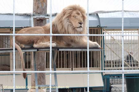 Zoo Krone